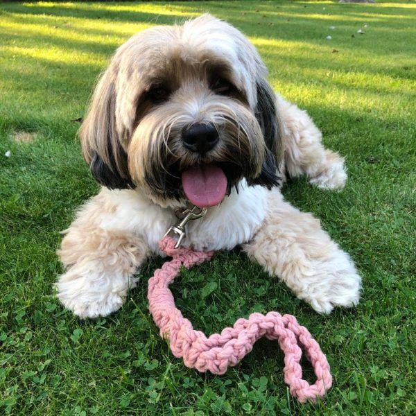 cute dog with a macrame dog lead