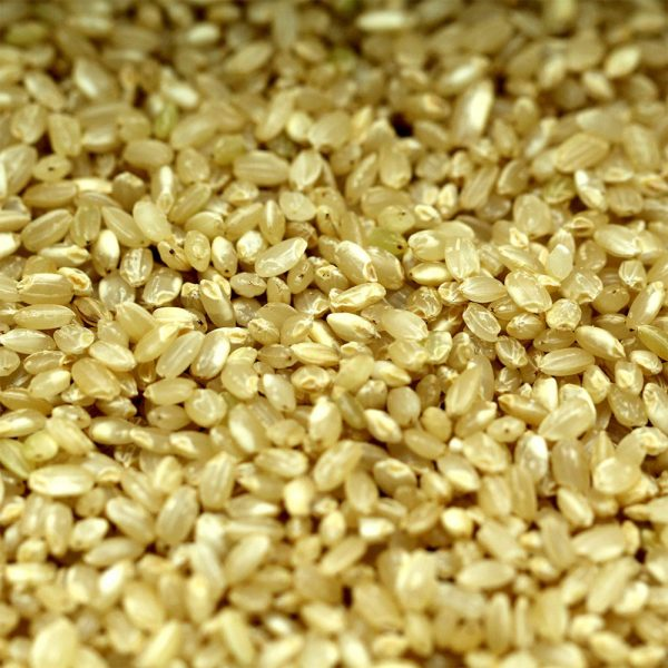 uncooked short grain brown rice