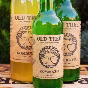 Old Tree Kombucha drinks